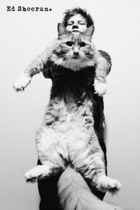 Ed Sheeran Holding A Cat Poster
